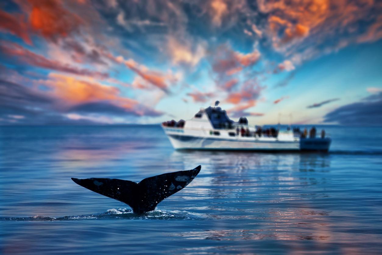 bitcoin crypto whale btc